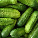 picklingCuke